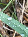 Raindrops on a leaf, nice and green Royalty Free Stock Photo