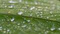 Raindrops Spread Over Royalty Free Stock Photo