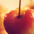 Rainer cherry with water droplets juicy close up Stock Image