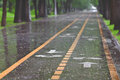 Rainfall on bicycle lanes in a park in springtime Royalty Free Stock Image