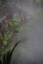 Rainforest atmosphere
