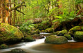 Rainforest Bridge Royalty Free Stock Images