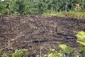 Deštný prales spálil zemědělství