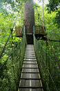 Rainforest canopy walk Stock Image