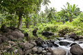 Rainforest on cook islands river in the Stock Image