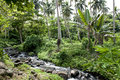 Rainforest on cook islands river in the Royalty Free Stock Images
