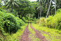 Rainforest dirt road Stock Images