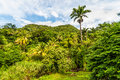 Rainforest dominica and volcanic mountains on caribbean island of Stock Image