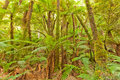 Rainforest fern tree wilderness forest in otago south island new zealand Royalty Free Stock Image