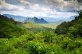 Rainforest of Khao Sok National Park Royalty Free Stock Photo