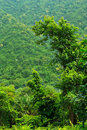 RainForest  at Khaoyai National Park Stock Image