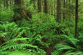 Rainforest olympic national park washington usa Stock Photo