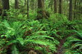 Rainforest olympic national park washington usa Royalty Free Stock Photography