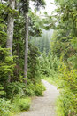 Rainforest path Royalty Free Stock Photography