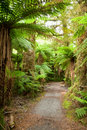 Rainforest path Stock Image