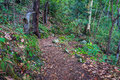 Rainforest path. Hiking in tropical rain forest Royalty Free Stock Photo