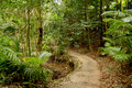 Rainforest path pathway through in north queensland australia Royalty Free Stock Photography