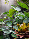 Rainforest photo of a with rain Stock Photos