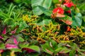 Rainforest plants tropical in garden Royalty Free Stock Photos