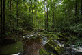 Rainforest plentiful water flow stream at Royalty Free Stock Images
