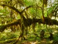 Rainforest, Rain forest Royalty Free Stock Photo