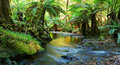 Rainforest River Panorama Royalty Free Stock Images
