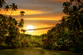 Rainforest River Sunset Stock Image