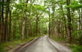 Rainforest road Royalty Free Stock Photos