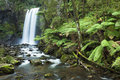 Rainforest waterfalls, Hopetoun Falls, Victoria, Australia Royalty Free Stock Photo