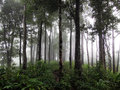 Rainforests and fog in southeast asia Royalty Free Stock Photos