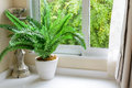 Rainy day plant and candlestick with rain falling outside Royalty Free Stock Photo