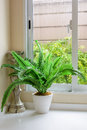 Rainy day plant and candlestick with rain falling outside Royalty Free Stock Photography