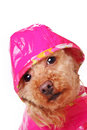 Rainy Days Royalty Free Stock Photo