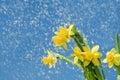 Rainy Flower Background