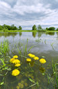 Rainy summer a flooded meadow river sukhodrev kaluga region russia Stock Images