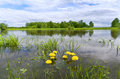 Rainy summer a flooded meadow river sukhodrev kaluga region russia Stock Image