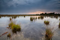 Rainy sunset over swamps gloomy fochteloerveen netherlands Royalty Free Stock Images