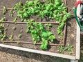 Elevado cama jardín suelo remojar y cultivo en jardín cerrar