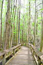 Raised boardwalk at swan lake wooden winding through the swamp side and iris gardens in sumter sc in spring cypress knees and Stock Photo