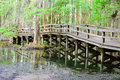 Raised boardwalk at swan lake wooden winding through the swamp side and iris gardens in sumter sc in spring cypress knees and Royalty Free Stock Images