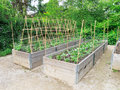 Raised garden frames salad and vegetable crop in wooden Royalty Free Stock Photos