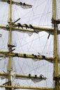 Raising the sails Royalty Free Stock Photo