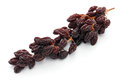 Raisins on the vine dried grapes a bunch of isolated white background Royalty Free Stock Photo