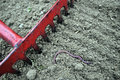 Rake and earthworm red old preparing the ground lumbricus terrestris on surface of soil Royalty Free Stock Photo