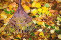 Rake and leafs Stock Images