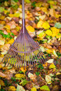 Rake and leafs Royalty Free Stock Photo