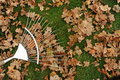Rake and leaves Royalty Free Stock Photography