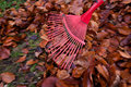 Rake leaves. Leaves. Gardening Royalty Free Stock Images