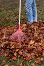 Rake leaves. Leaves. Gardening in the fall. Stock Photo