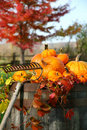 Rake and pumpkins Stock Images